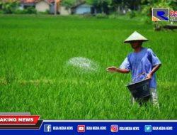 Pupuk Subsidi Langka di Aceh Selatan, Petani Menjerit