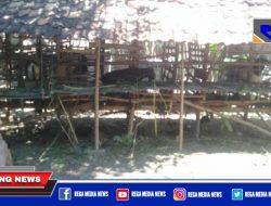 Idul Adha Dipandemi Covid, Penjual Kambing Qurban di Sampang Menjerit